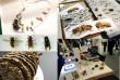 Insectos sociales