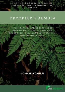 jpg 3 dryopteris